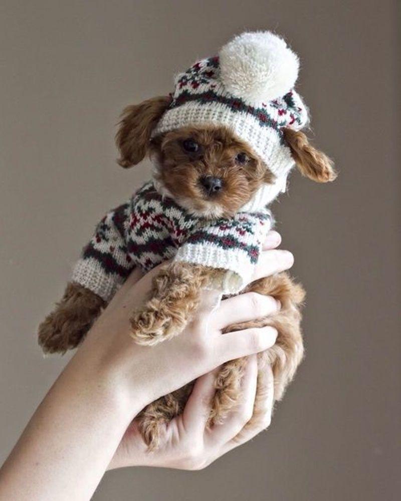 30 ideias com crochê e tricô para Pets