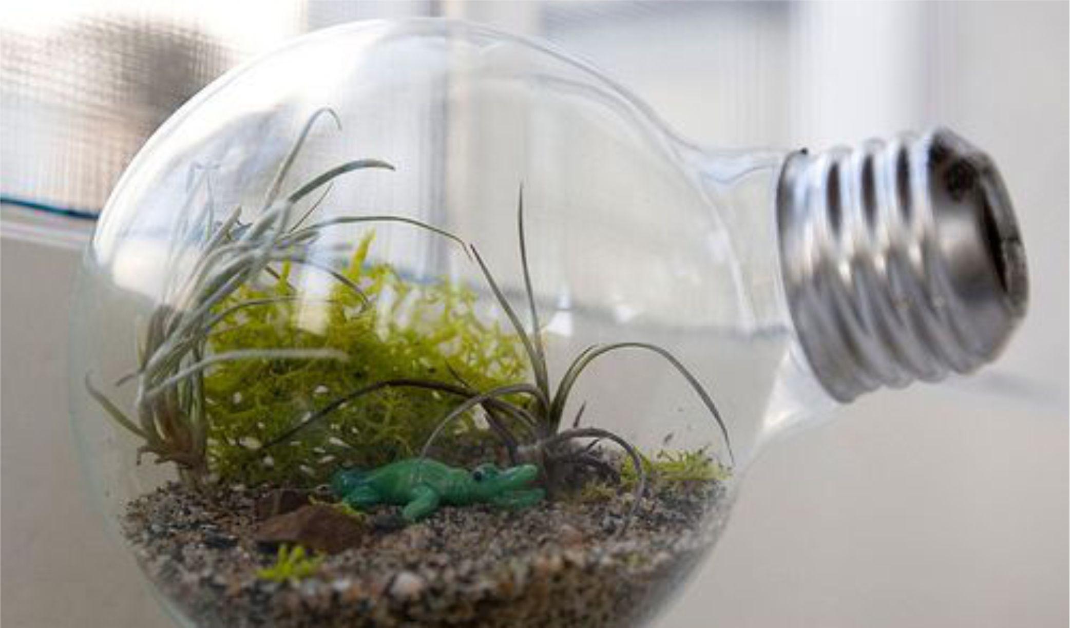Mini jardim na lâmpada
