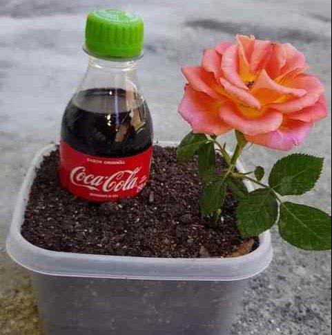 jardinagem com refrigerante